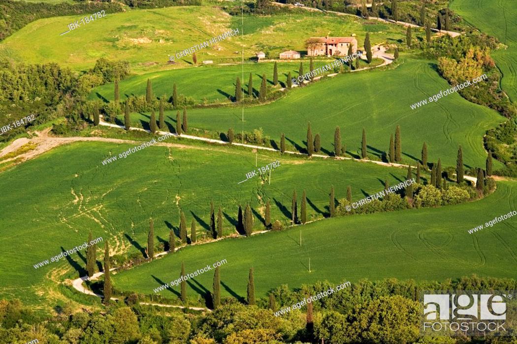 Stock Photo: Tuscany cypress alley la Foce, Crete, Italy, Europe.