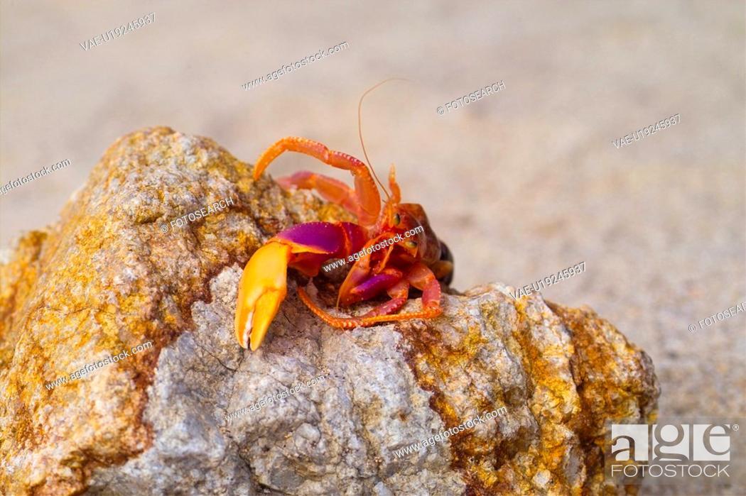 Stock Photo: seashore, sea, crawfish, rock, sand, animal, natural.
