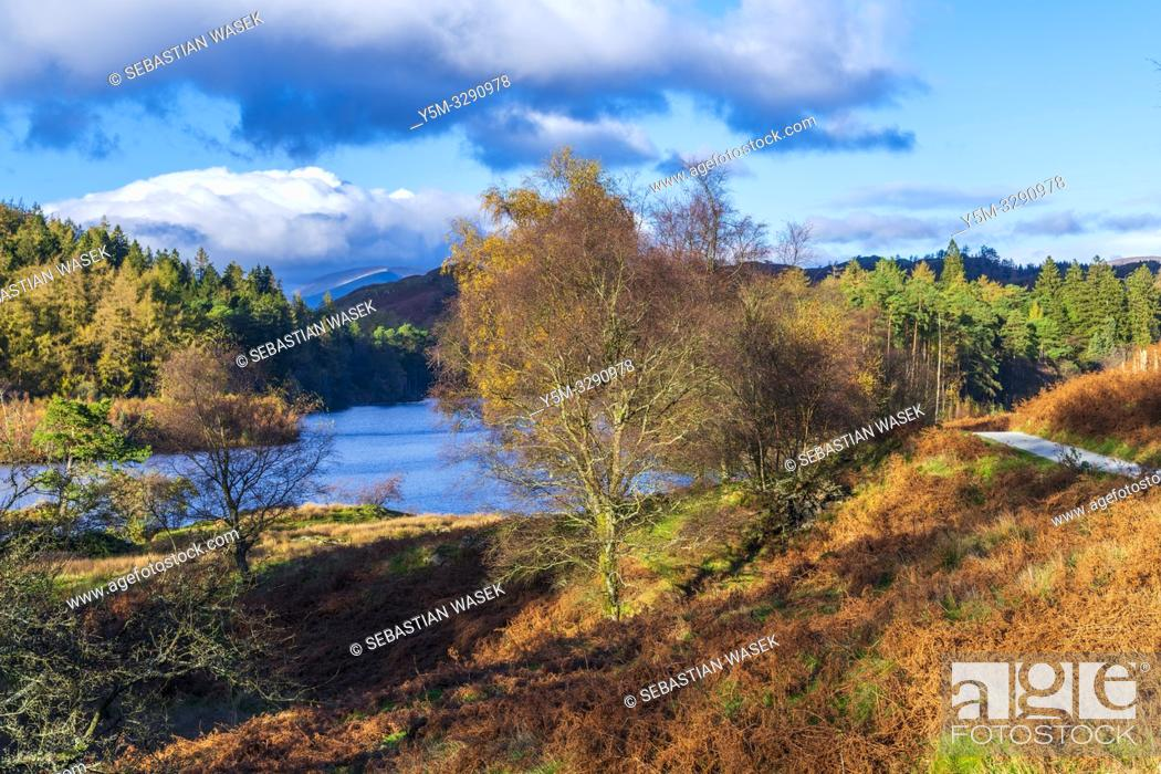 Stock Photo: The Tarns, Tarn Hows near Coniston, Lake District National Park, Cumbria, England, United Kingdom, Europe.