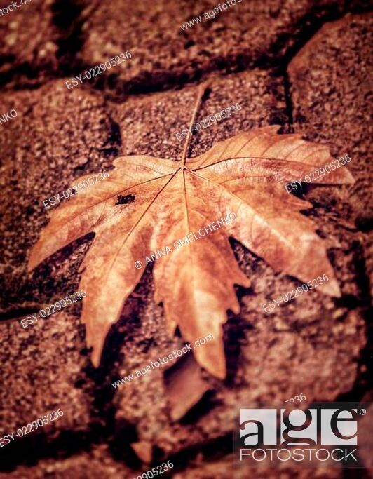 Stock Photo: Abstract autumn background.