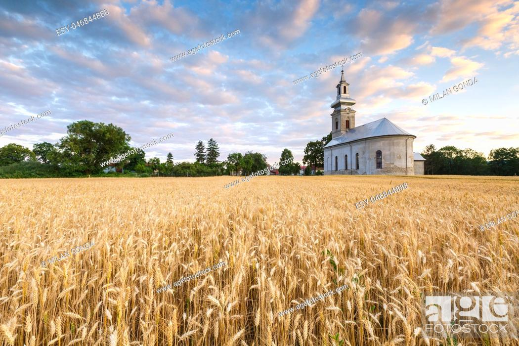 Stock Photo: Rural landscape with wheat field and a church in Turiec region, central Slovakia. .