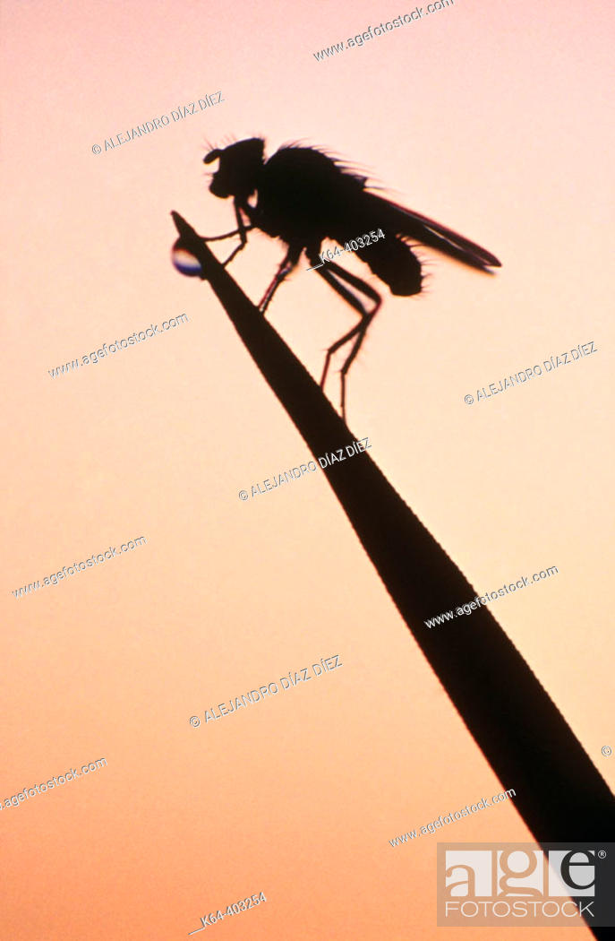 Stock Photo: Fly at sunset. Michigan, USA.