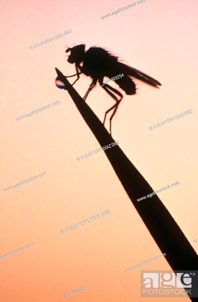 Stock Photo: Fly at sunset. Michigan, USA.