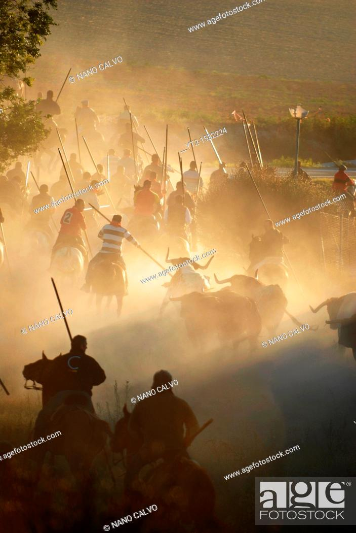 Stock Photo: 'Los Encierros de Cuéllar', the oldest and most authentic Running of the Bulls in Spain  The small Segovian village of Cuéllar, north of Madrid.