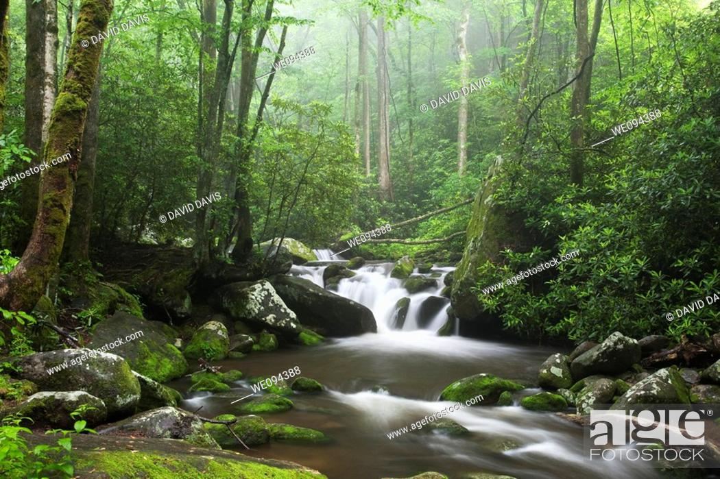 Stock Photo: Relaxing scenic along the Roaring Fork Moter Tour in the Great Smoky Mountains National Park.