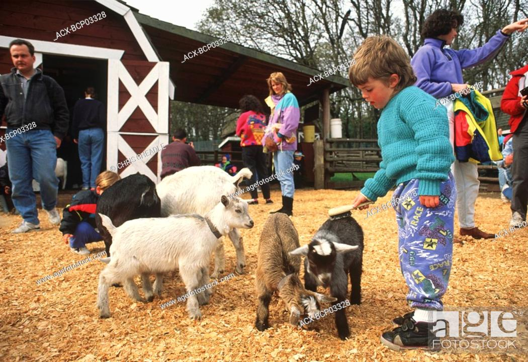Stock Photo: Young boy petting a goat in the petting zoo in Beacon Hill Park, Victoria, Vancouver Island, British Columbia, Canada.