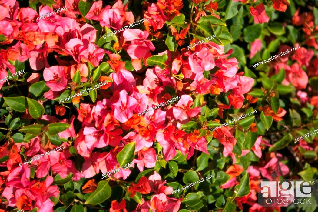 Stock Photo: Close-up of a bush of flowers.