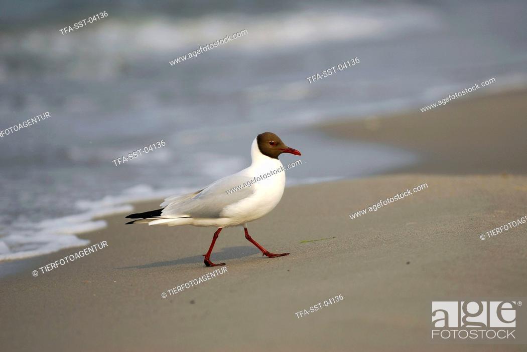 Imagen: gull.