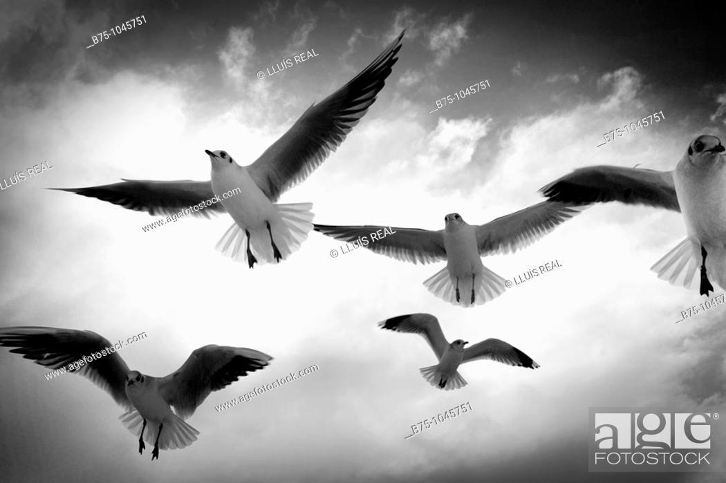 Stock Photo: Seagulls.