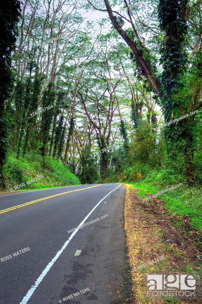 Stock Photo: Hawaii Back Highway.