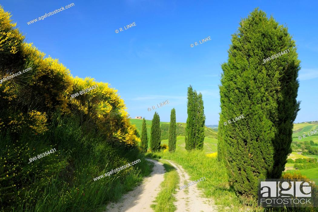 Imagen: Dirt Road with Cypress Trees in Spring, San Quirico d' Orcia, Val d' Orcia, Italy, Tuscany.