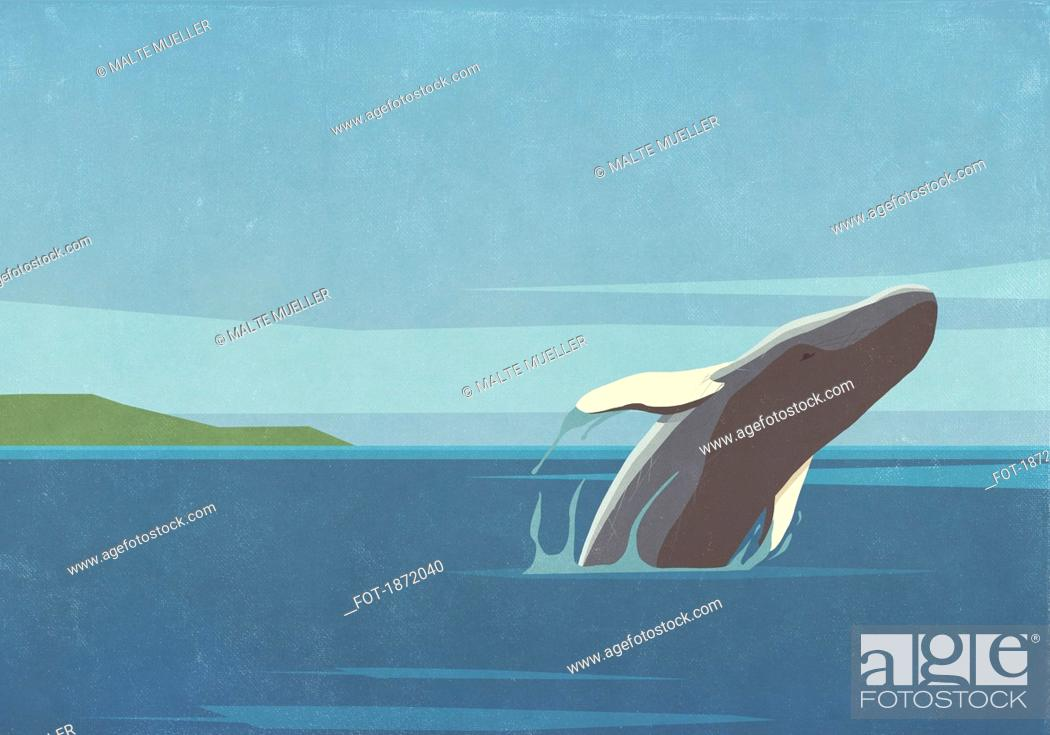 Stock Photo: Whale breaching in ocean.