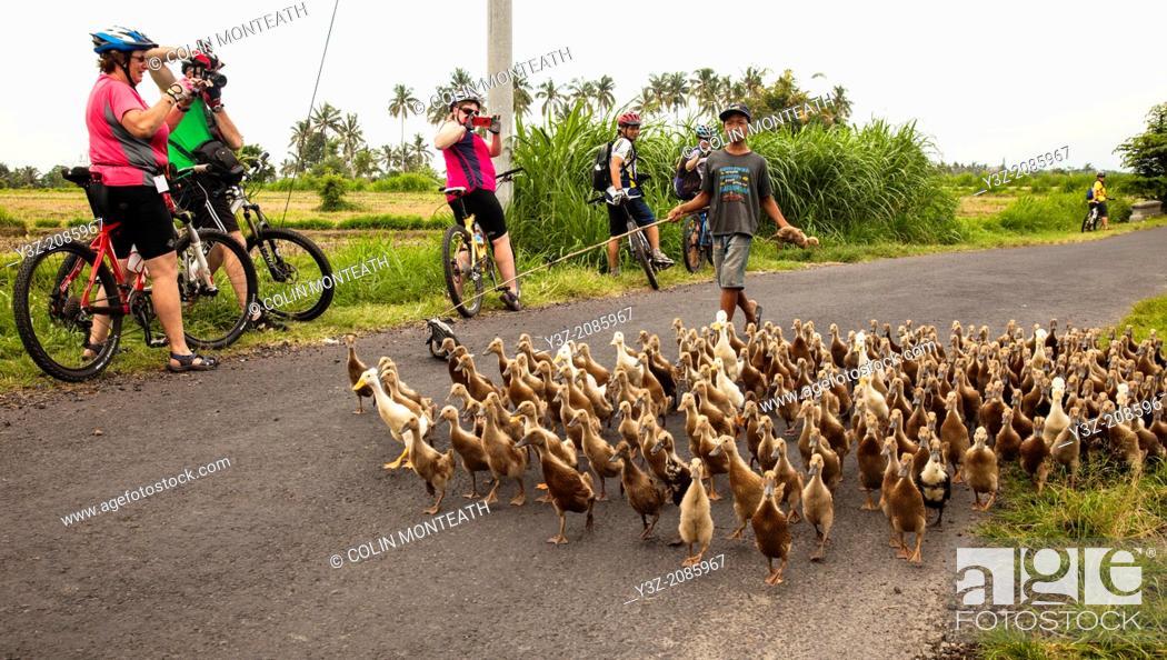 Stock Photo: Cyclists watch boy herding ducks, Bali, Indonesia.