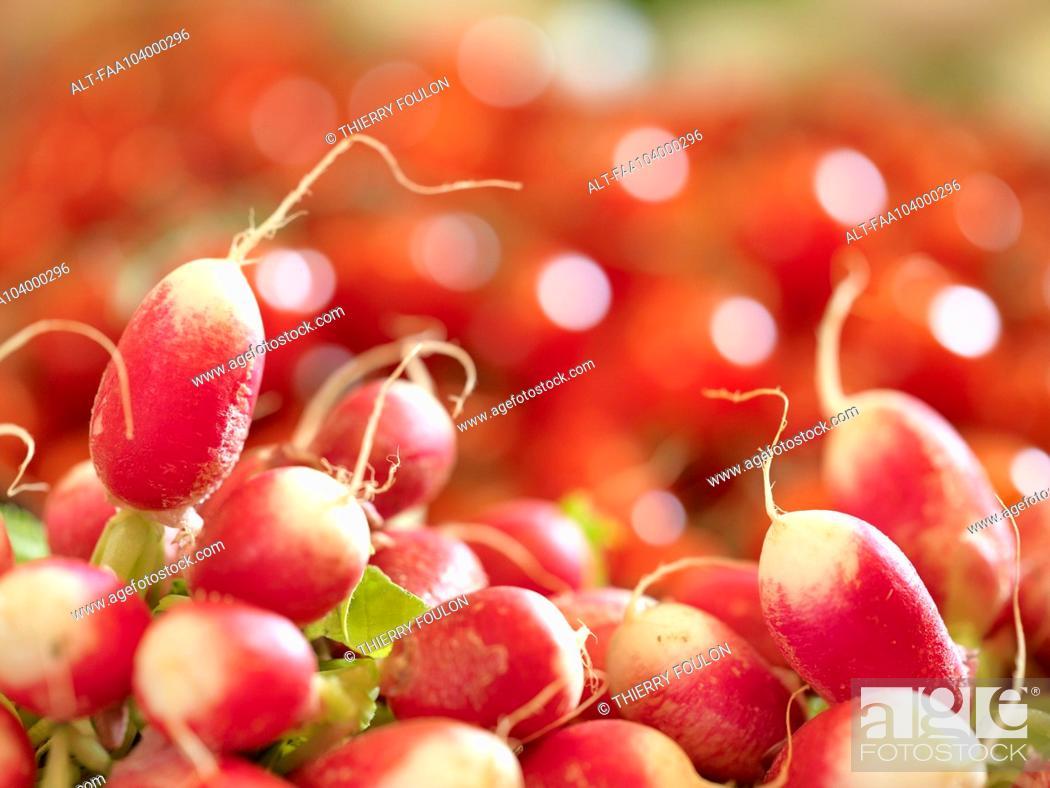 Stock Photo: Raw radishes.
