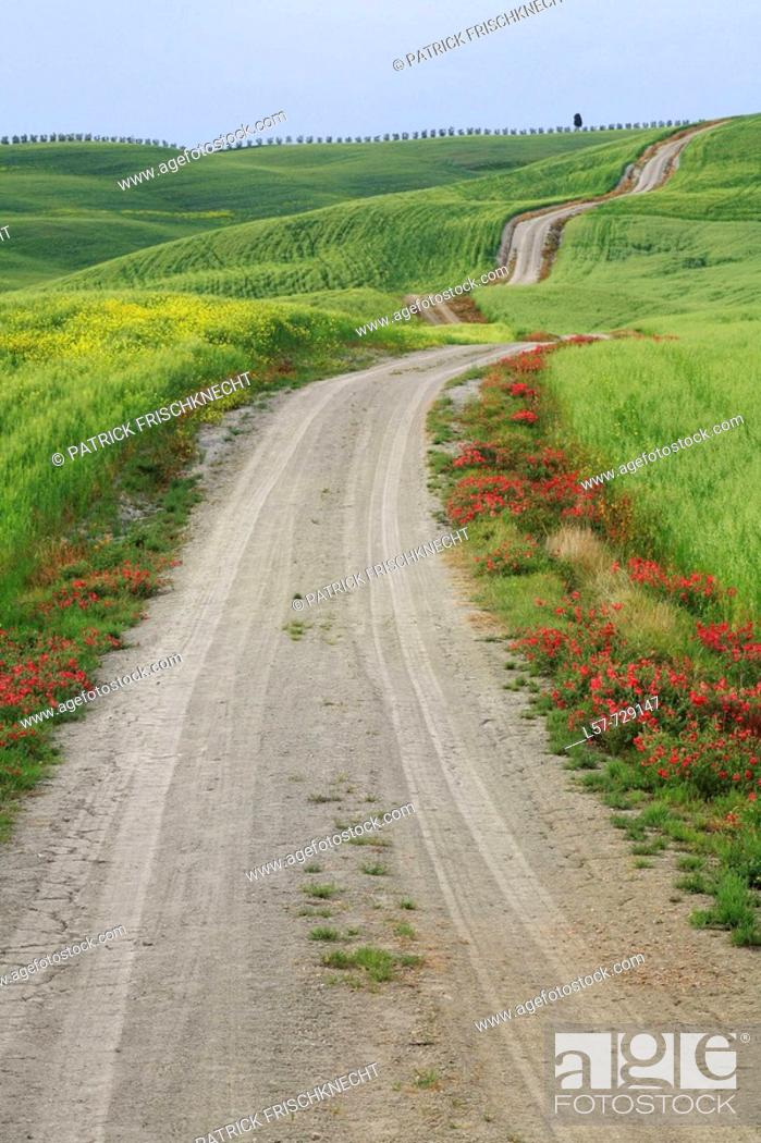 Stock Photo: Unpaved road leading through hill countryside, wheat field, crop, Rape, agricultural landscape, Tuscany, Italy.