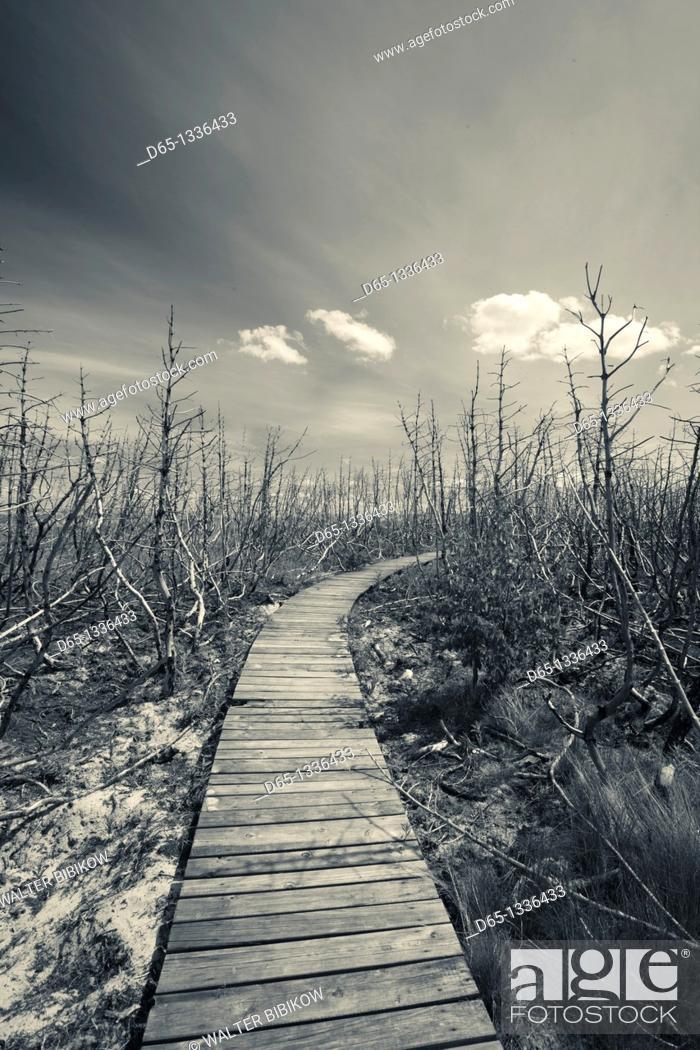 Stock Photo: Lithuania, Western Lithuania, Curonian Spit, Meskos Galva Dune area.