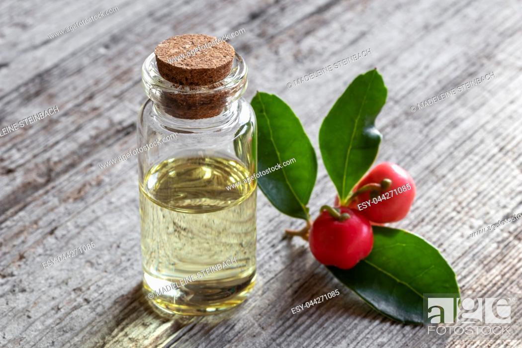 Stock Photo: A bottle of essential oil with wintergreen leaves and berries.
