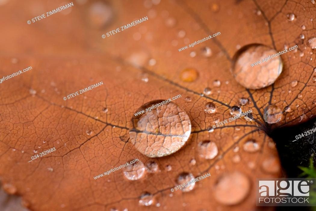 Stock Photo: Drop Leaf.