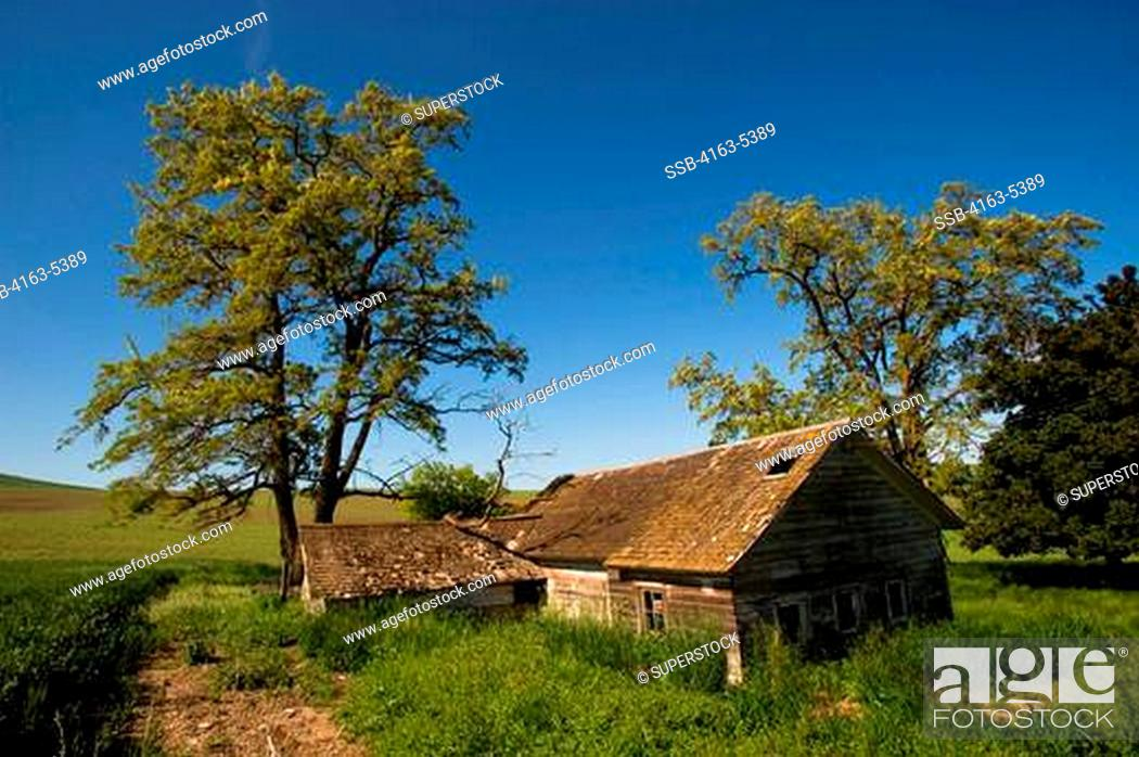 Stock Photo: USA, WASHINGTON STATE, PALOUSE COUNTRY, ABANDONED FARM.