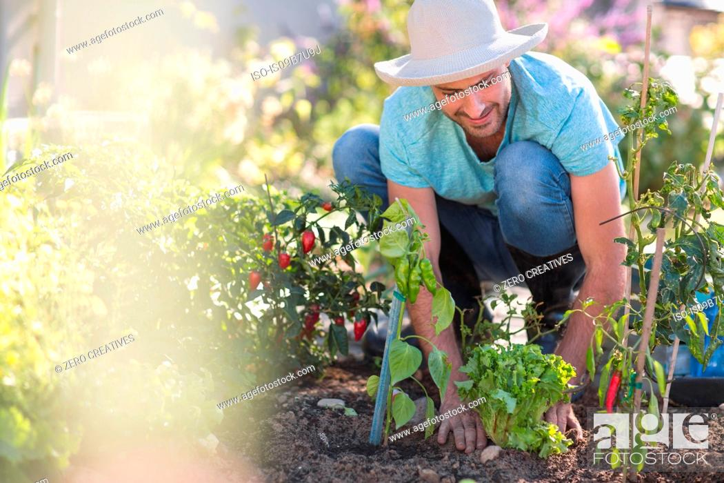 Stock Photo: Young man in garden, tending to plants.