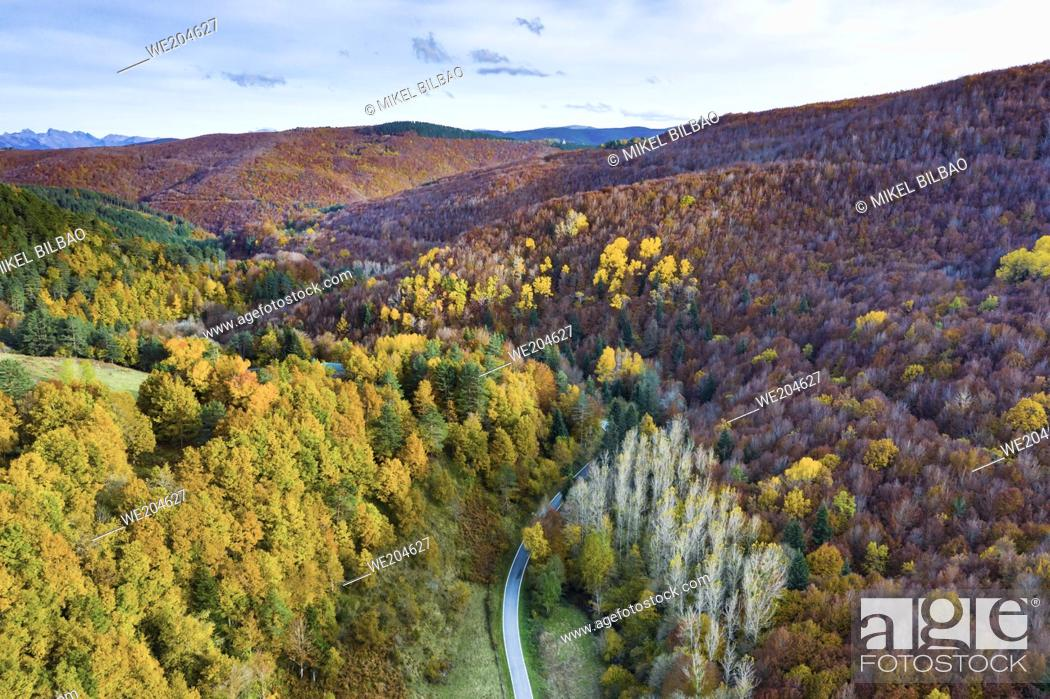 Imagen: Aerial view of a decidual forest and road in autumn. Close to Irati area. Navarre, Spain, Europe.