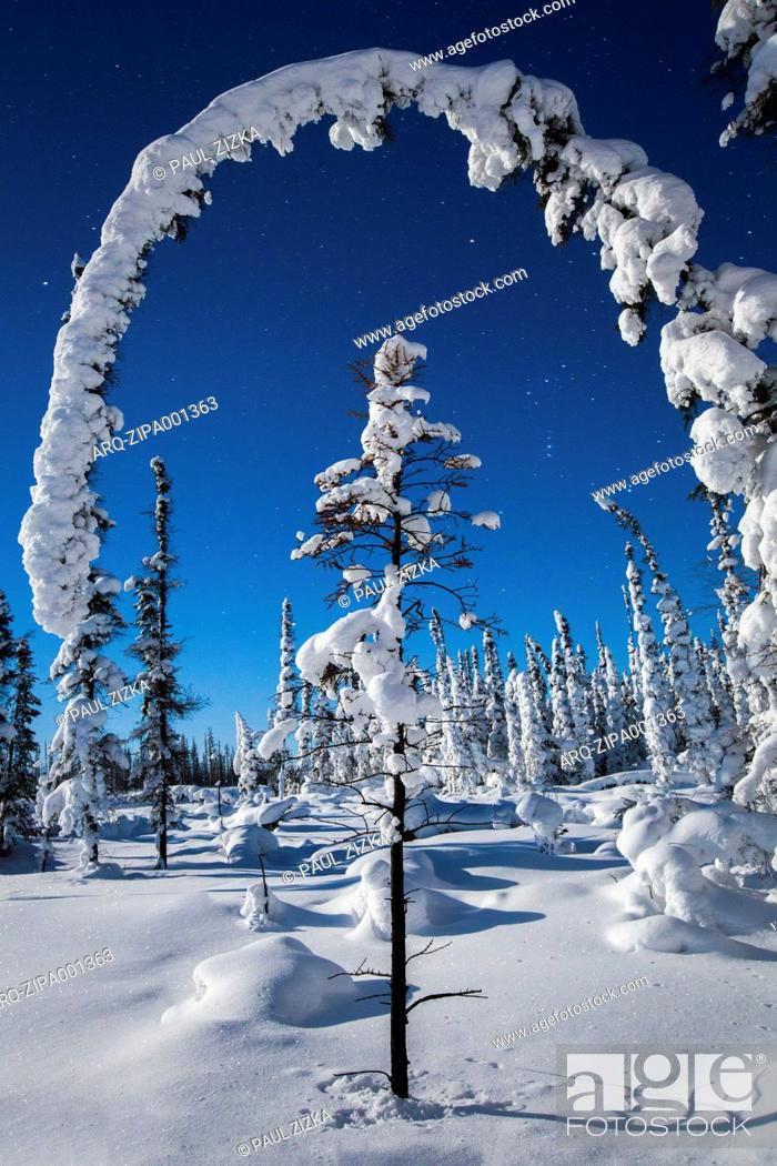 Imagen: Snow Covered Trees Below Starry Sky.
