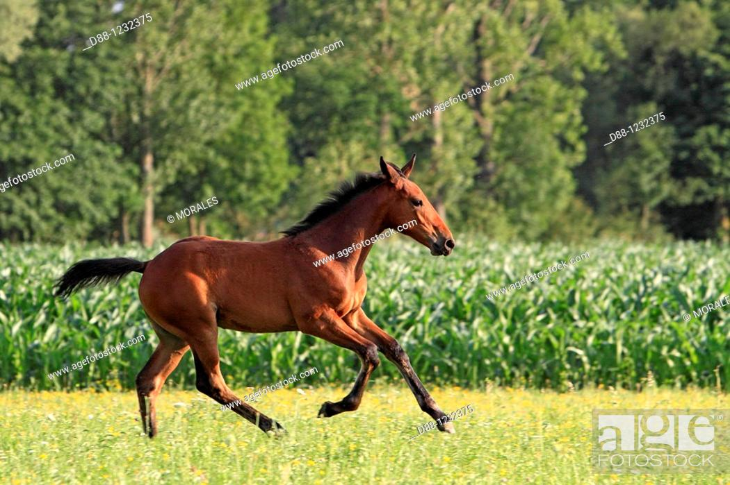 Stock Photo: Foal. 2 month old .