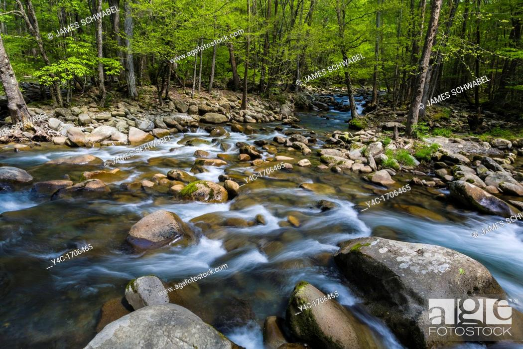 Stock Photo: Spring on the Middle Prong of the Little Pigeon River in the Greenbrier area of the Great Smoky Mountains National Park in Tennessee.