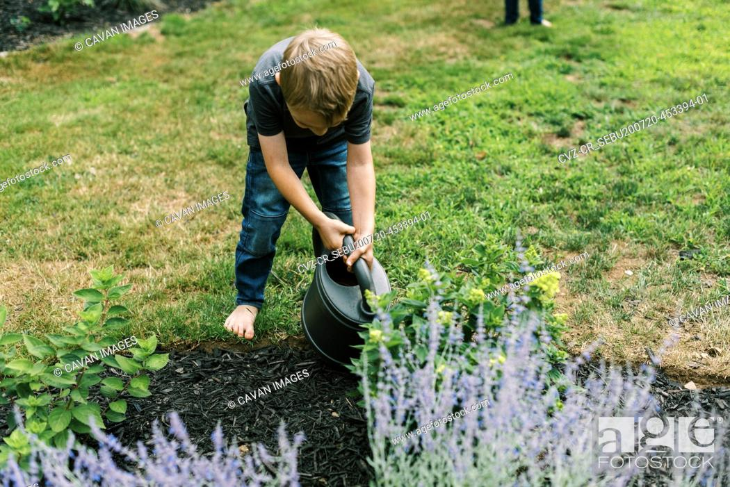 Stock Photo: Boy helping with the watering of the plants in the garden.