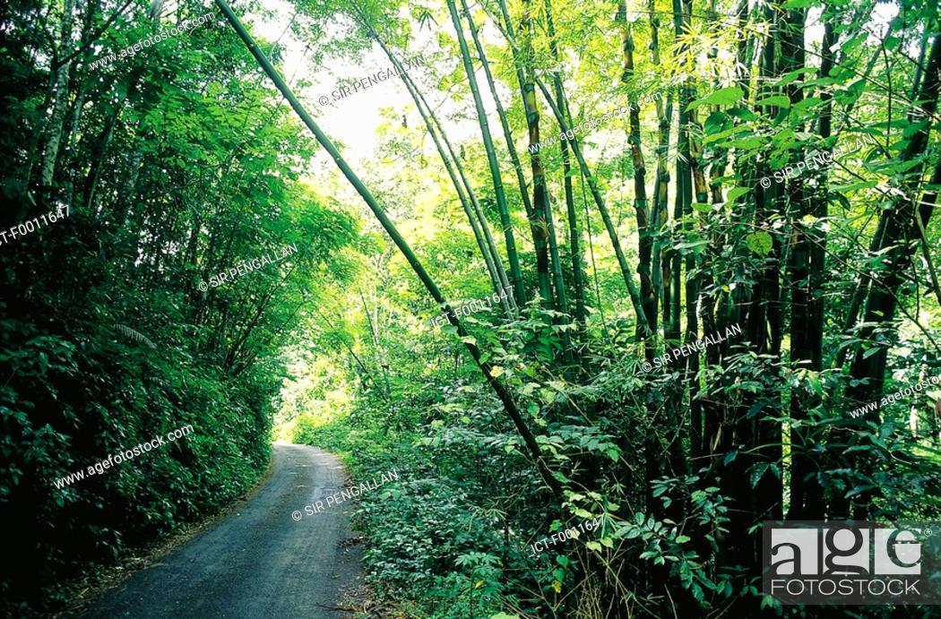 Stock Photo: Jamaica, Montego Bay, tropical park.