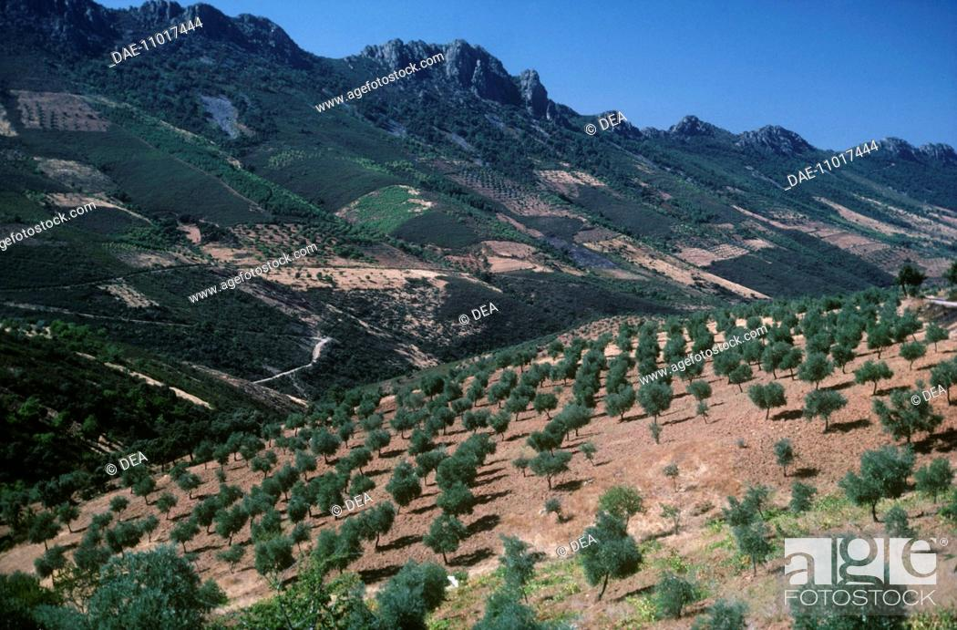Stock Photo: Spain - Extremadura - Agricultural landscape.