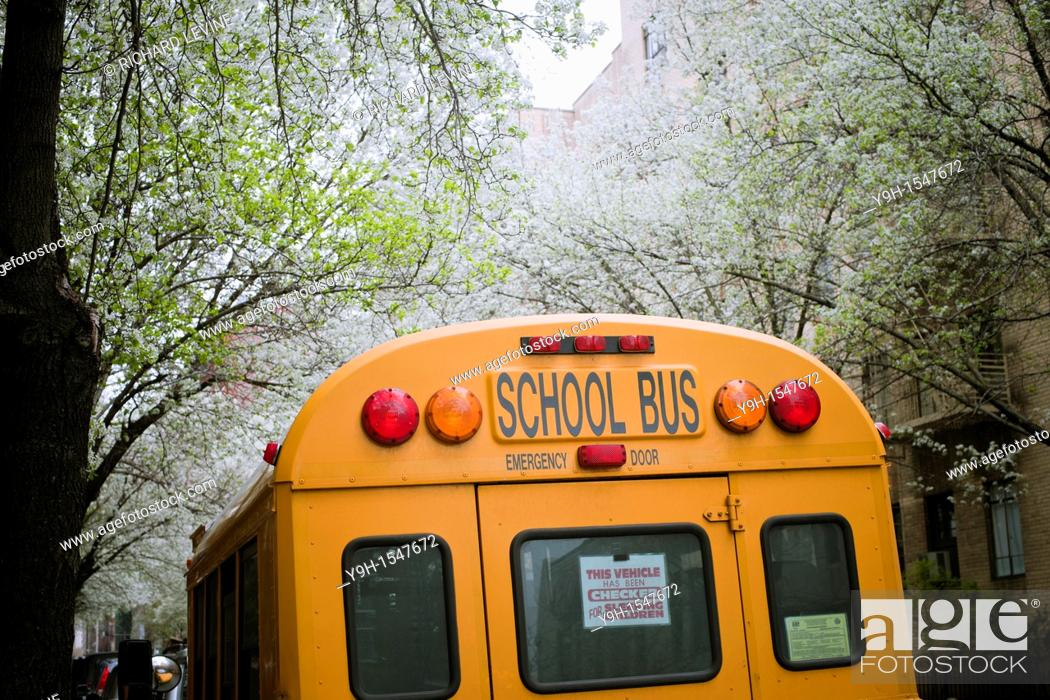 Stock Photo: School bus checked for sleeping children parked in the New York neighborhood of Chelsea amongst blooming callery pear trees.