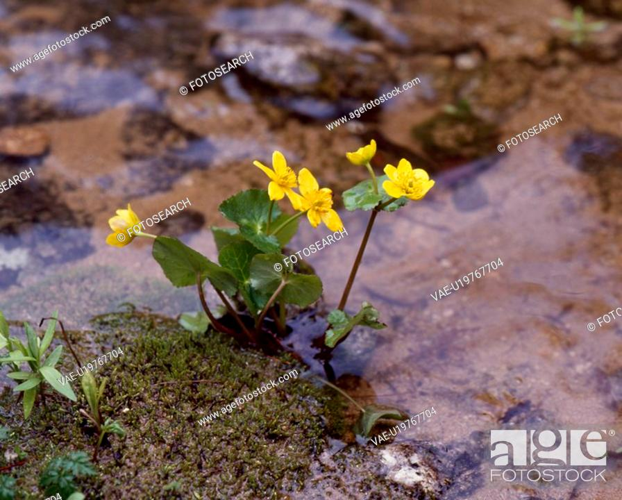 Stock Photo: flowers, nature, flower, closeup, scene, wildflower, landscape.