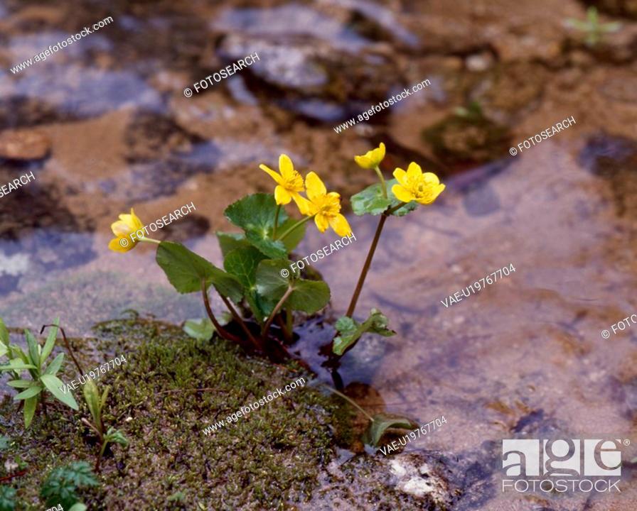 Stock Photo: flowers, nature, flower, closeup, scene, wildflower, landscape.