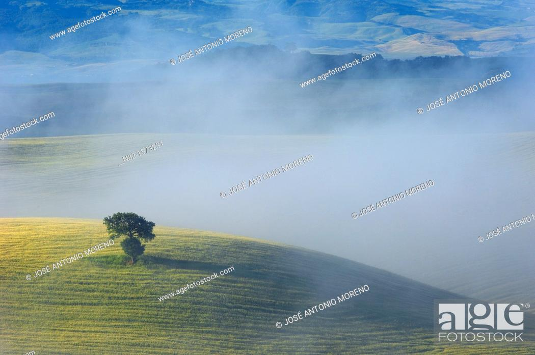 Stock Photo: Val d'Orcia at dawn, morning fog, Tuscany landscape, UNESCO world heritage site, San Quirico d'Orcia, Siena province, Tuscany, Italy.