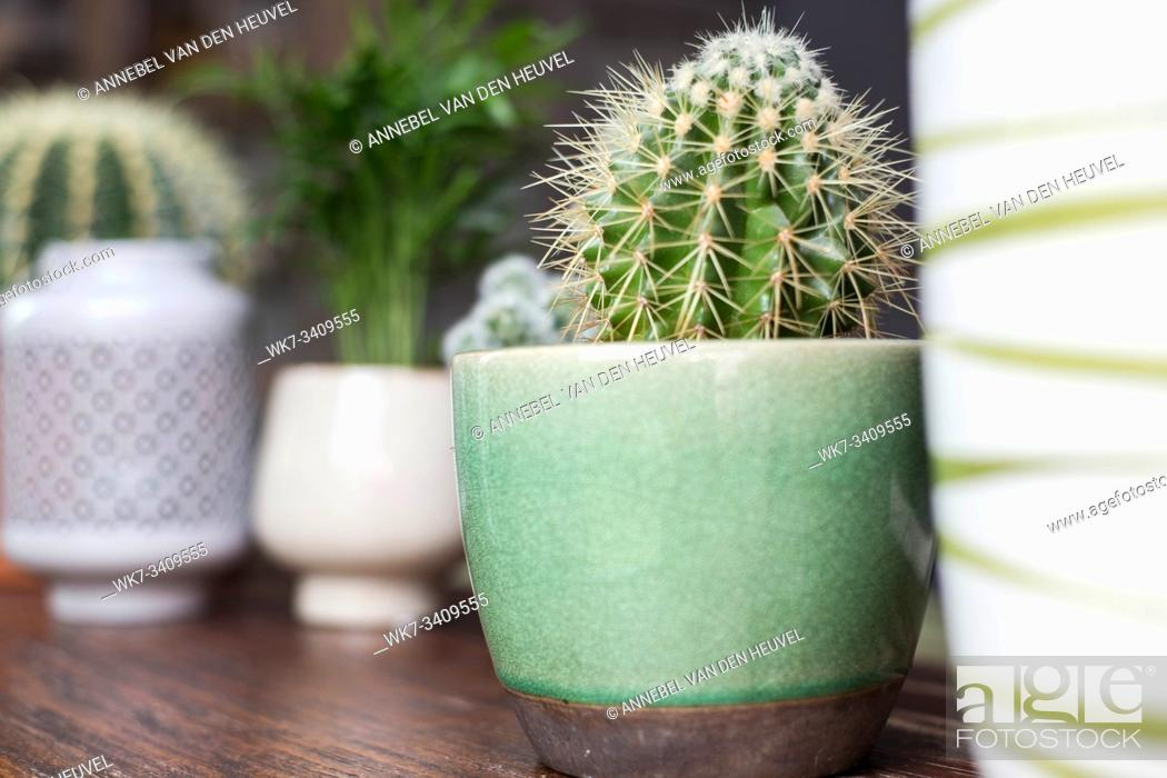 Stock Photo: Various types of cactus and green house plants , on wooden table. modern design decoration.