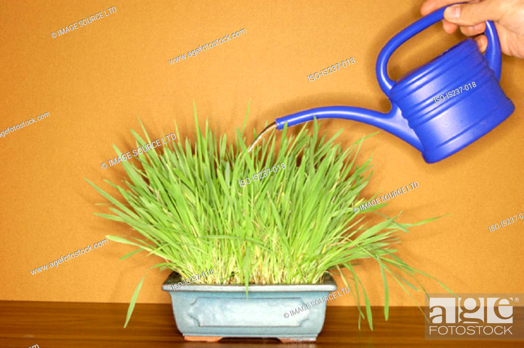 Stock Photo: Watering can and plant.