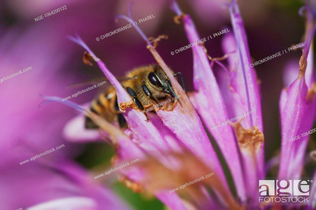 Imagen: Bee on a flower.