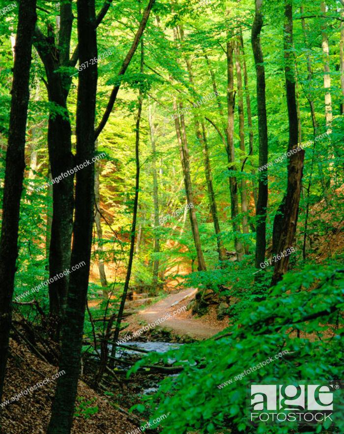 Stock Photo: Path in beech wood. Skane. Sweden.