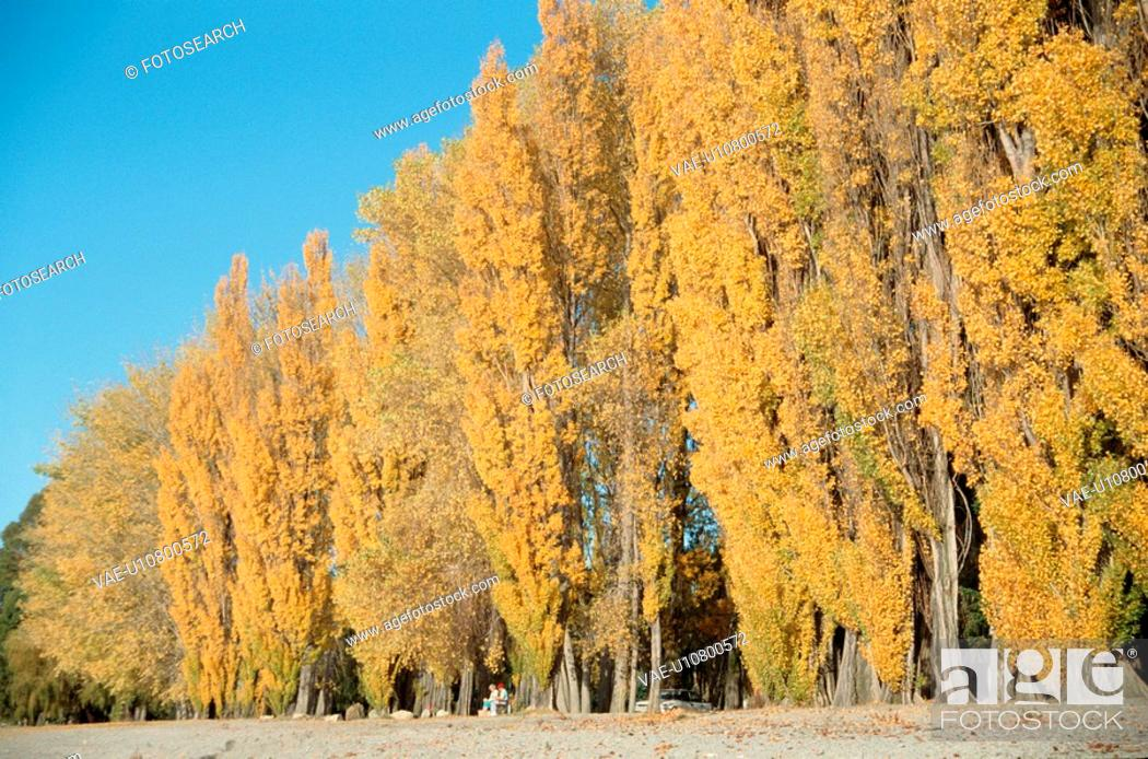 Stock Photo: Trees Turning Yellow.