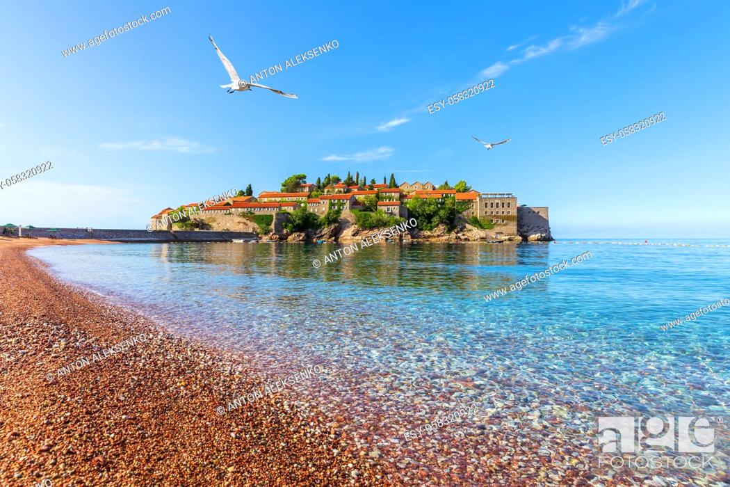 Imagen: Seagull flies by Sveti Stefan islet near Budva, view from the Beach, Montenegro.