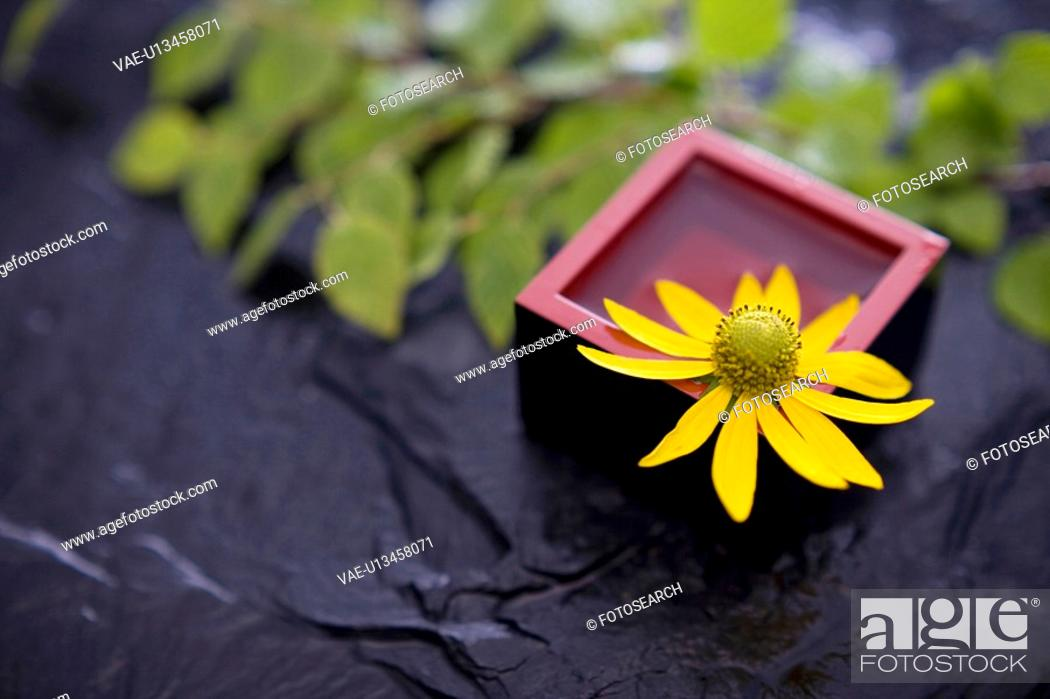 Stock Photo: Helianthus tuberosus.