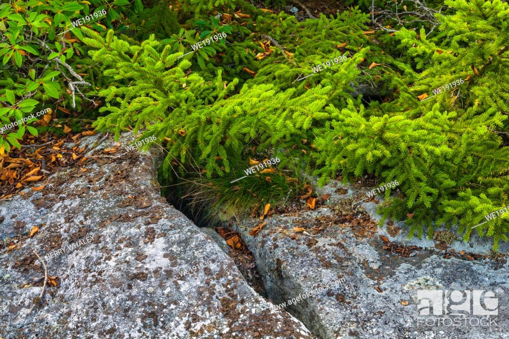 Stock Photo: Autumn Scenery at Dolly Sods, Monongahela National Forest, WV.