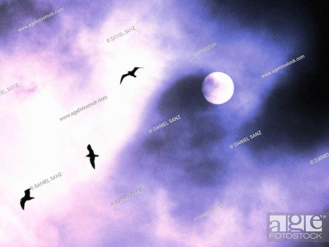 Stock Photo: Swallows.