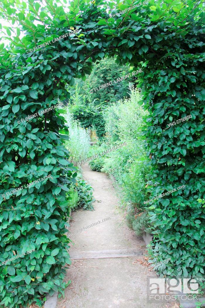 Stock Photo: Carpinus betulus: arch in a garden's pathway.