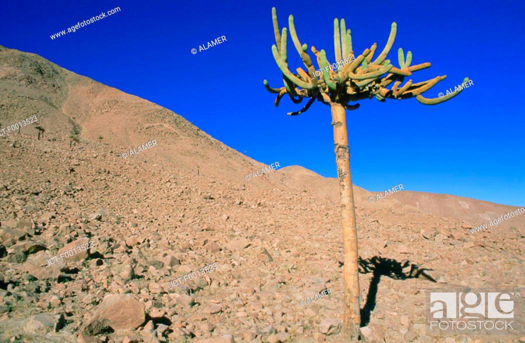 Stock Photo: Chile, Altiplano.