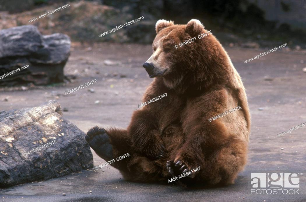bear-masturbation