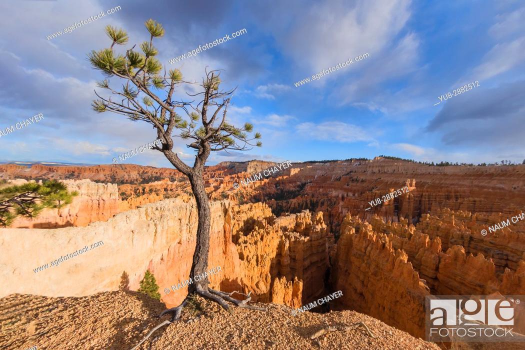Stock Photo: Bryce Canyon National Park, Utah, USA.