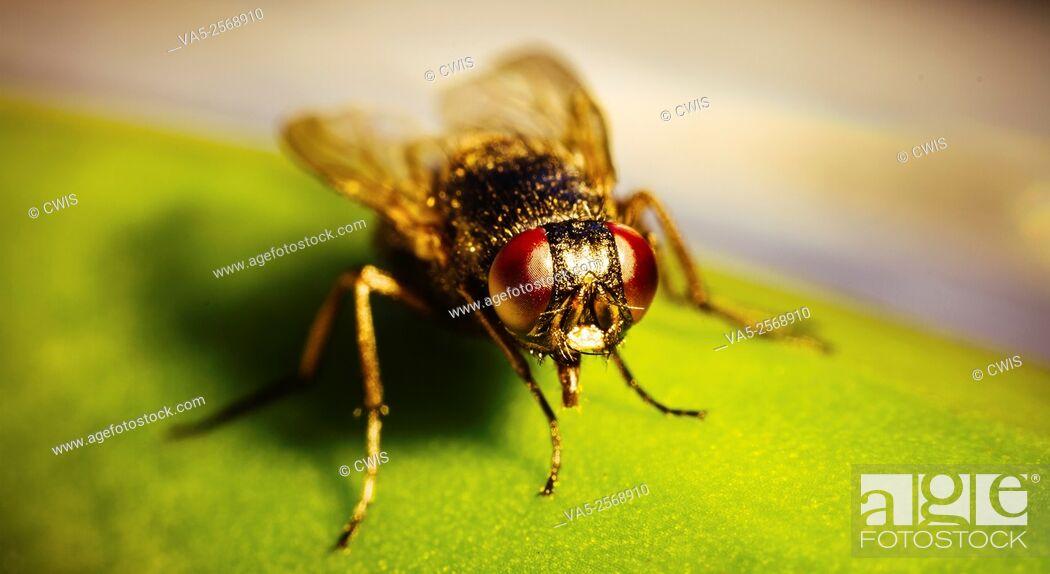 Imagen: Close up of a tiny fly.