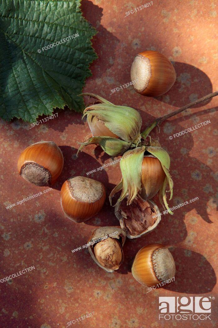Imagen: Freshly picked hazelnuts.